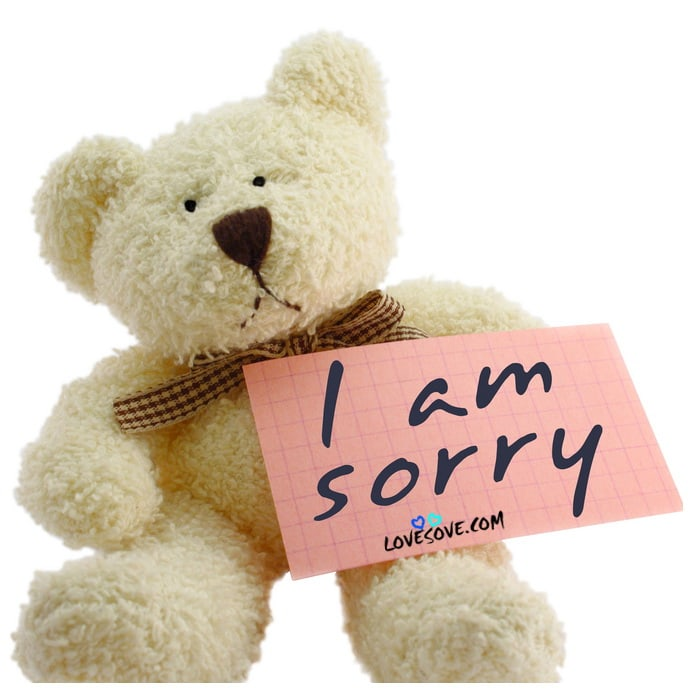 Sorry Teddy Bear Hd Wallpaper Free