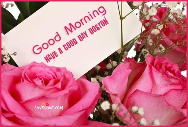 good-moning-pink-rose-lovesove