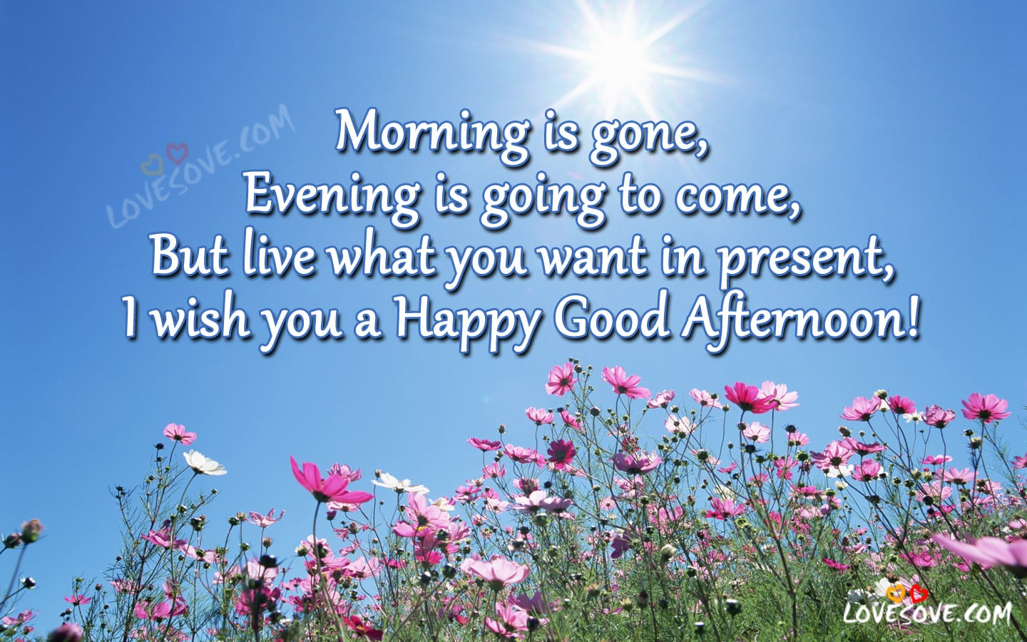 Morning Is Gone I Wish You A Happy Good Afternoon