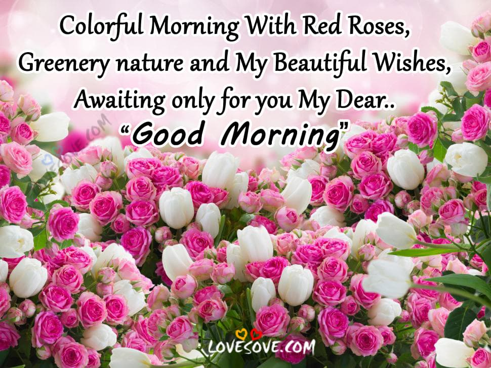 Lovesove Good Morning Wallpaper : colorful Morning With Red Roses, Good Morning Wishes Images
