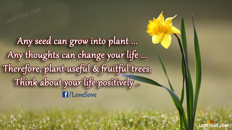 Any Seed Can Grow - Life Quotes Images, Wisdom Quotes Picture, Best Life Quotes Images For Facebook, Life Quotes Images For WhatsApp Status, Life messages