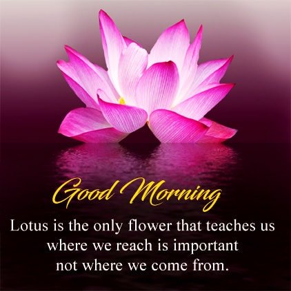 Fresh Morning Quotes And Sayings Display Photo Facebook