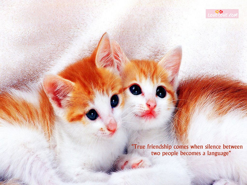 sweet-and-cute-friendship-wallpapers LoveSove.com