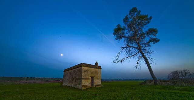 house-tree-lovesove