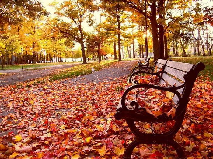 patjhad-autumn-image-leaves-lovesove