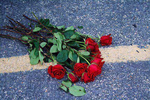 flower-rose-wallpaper-014