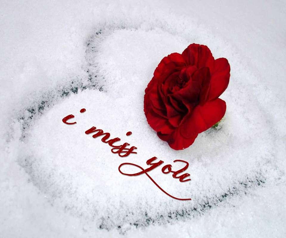 miss-you-wallpaper-rose-lovesove