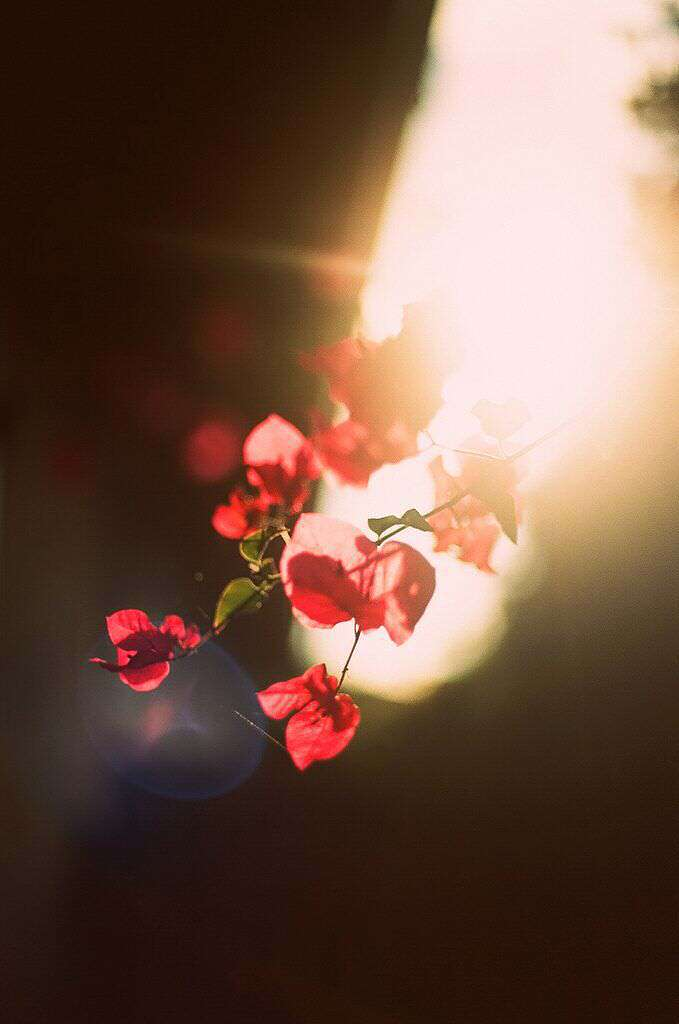 red-flower-lovesove