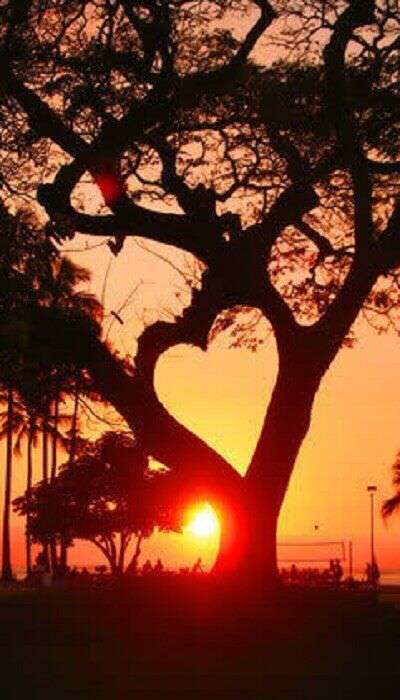 sunset-heart-in-tree-lovesove