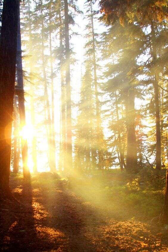 morning-sunrise-trees-sun-reflectin-lovesove, Nayi si subah - Hindi Good Morning SMS, Wishes, Shayari, Good Morning Wishes For facebook, Good Morning Status For WhatsApp Friends
