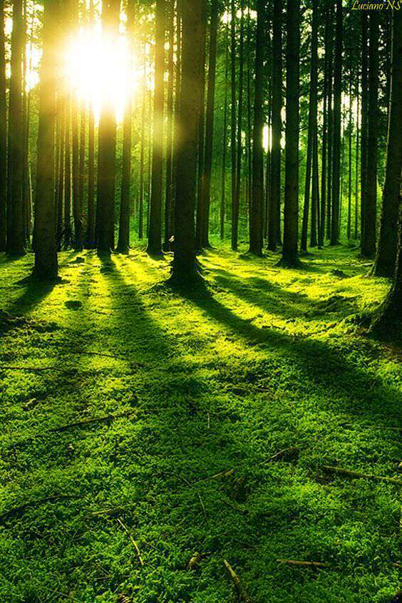 sunrise-morning-tree-lovesove