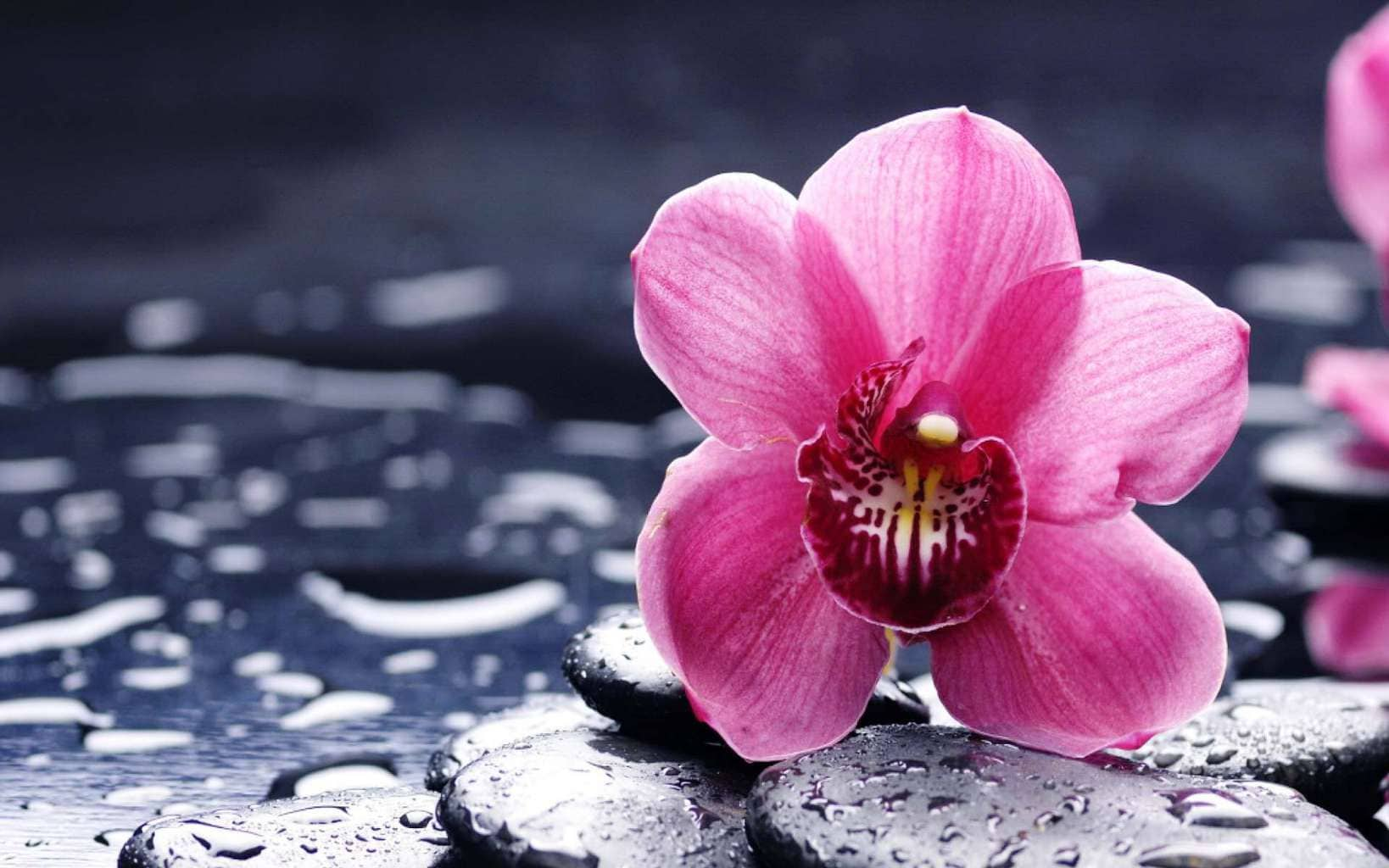 Pink-fallen-flowers-on-black-stone-lovesove