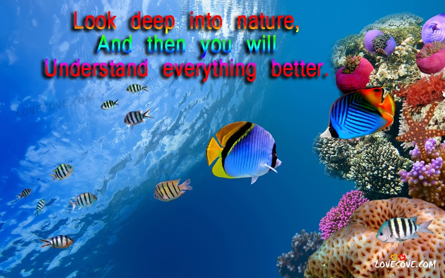 Nature quotes nature images nature wallpapers nature - Nature wallpaper status ...