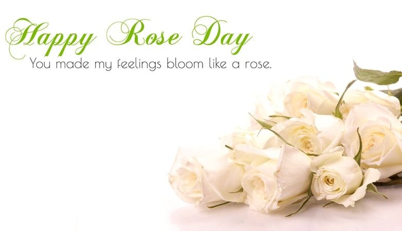 Happy rose day, 2 line shayari on rose, rose day, Rose day shayari, rose day shayari image, rose day special shayari