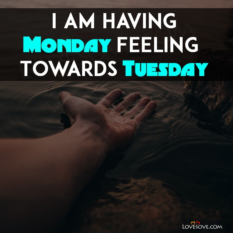 Tuesday Status Quotes, Funny Tuesday Facebook Status, Super Tuesday Status, Tuesday Status, Happy Tuesday Status, Happy Tuesday Whatsapp Status, Tuesday Motivation Status, Tuesday Quotes For Facebook Status, Tuesday Morning Status, Tuesday Fb Status, Tuesday Good Morning Status, Tuesday Status For Whatsapp, Tuesday Funny Status, Status For Tuesday, Tuesday Whatsapp Status, Tuesday Status God, Status About Tuesday, Happy Tuesday Status Download, Tuesday Love Status, Tuesday Hindi Status, Tuesday Special Whatsapp Status, Tuesday Status Images, Tuesday Marathi Status, Best Tuesday Status, Tuesday Quote For Whatsapp Status, Tuesday Ganesh Status, Tuesday Status For Facebook, Good Morning Tuesday Whatsapp Status, Tuesday Status Download, Tuesday God Whatsapp Status, Ruby Tuesday Application Status, Tuesday Special Status