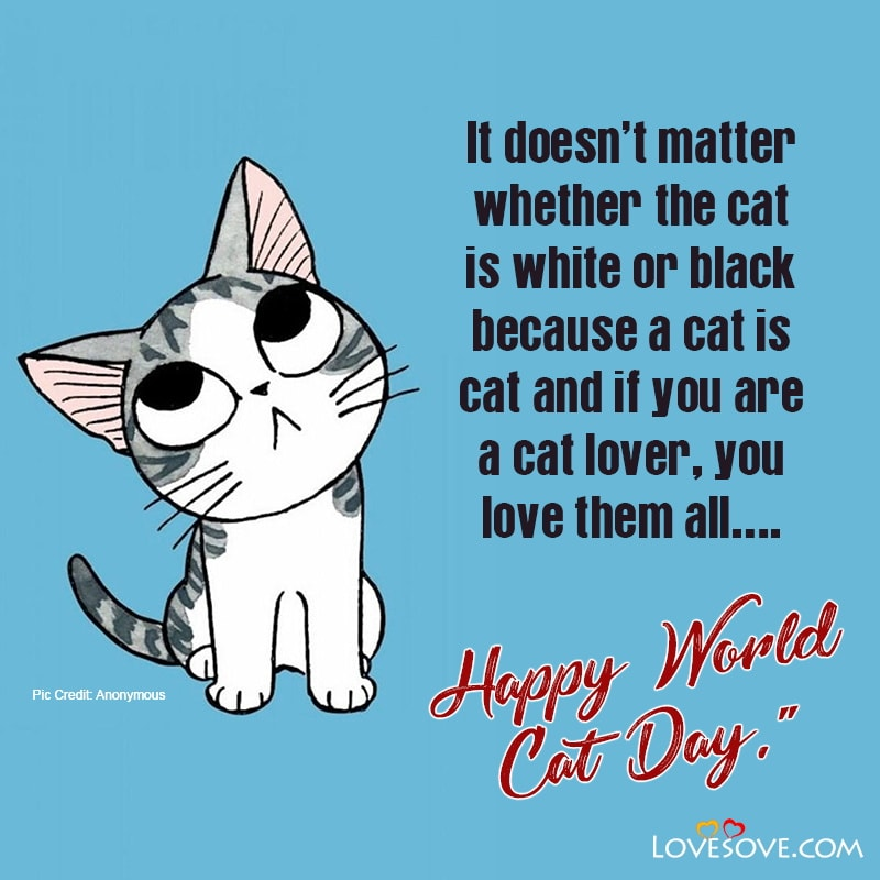 International Cat Day Wishes, World Cat Day Quotes & Slogans, August 8 is International Cat Day, Inspirational Cat Quotes Images
