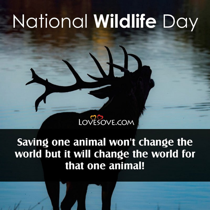 National Wildlife Day, National Wildlife Day Quotes, National Wildlife Day Status, National Wildlife Day Images,