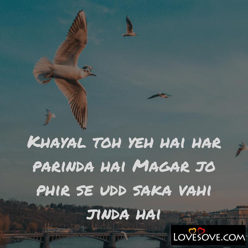 Parinda Shayari, Azad Parinda Shayari, Parinda Shayari In Hindi, Zakhmi Parinda Shayari, Qaid Parinda Shayari, Parindey Shayari,