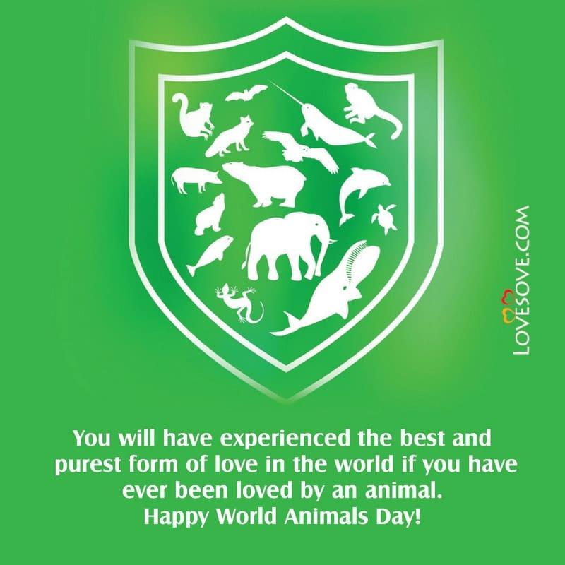 World Animal Day, Oct 4 World Animal Day, World Animal Day October 4, World Animal Day Images, Slogan On World Animal Day, Images For World Animal Day, Images Of World Animal Day,