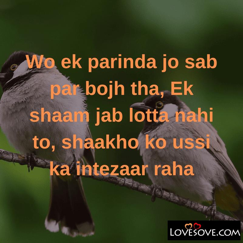 Shayari On Parindey, Nadaan Parindey Shayari, Parindey Shayari Hindi, Parinde Wali Shayari, Parinde Ki Shayari,