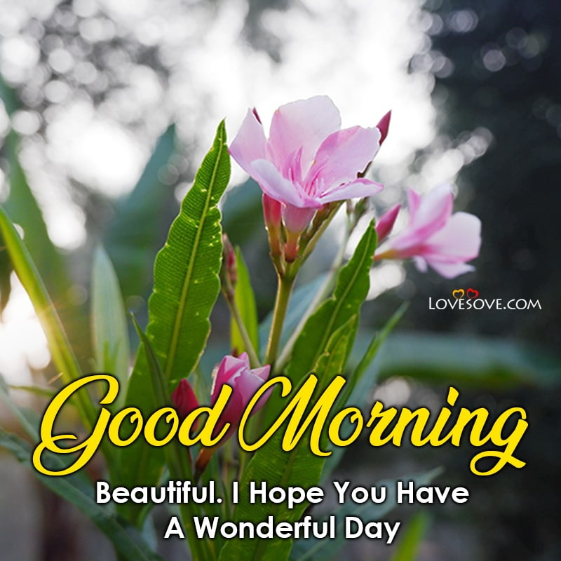 Good Morning Beautiful I Hope You Have A Wonderful Day, , good morning message pic lovesove